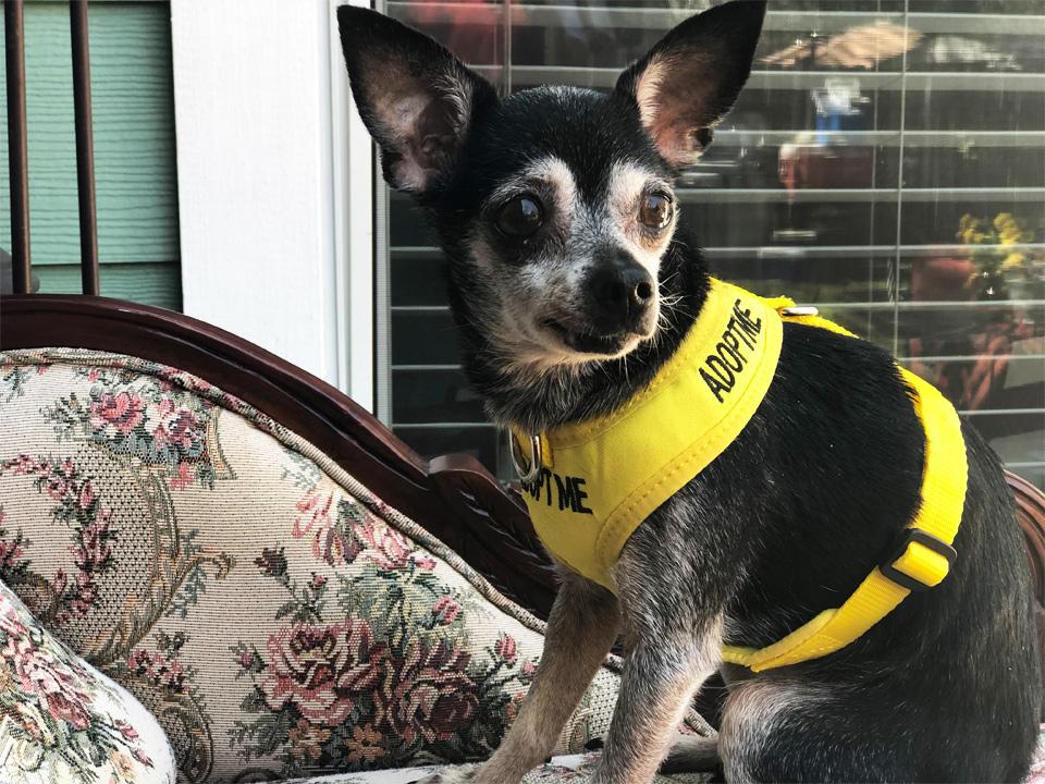 Jasmin ready for adoption